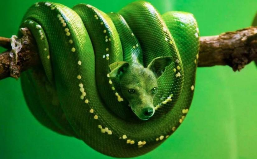 """""""Hybrid Animals"""" von Sarah DeRemer: Digitale Kunst"""