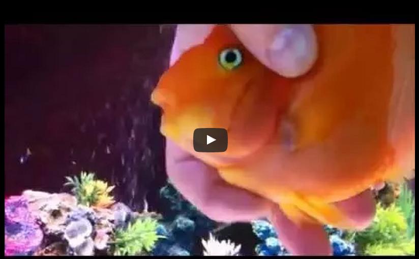 Ein Fisch benimmt sich wie ein Hund