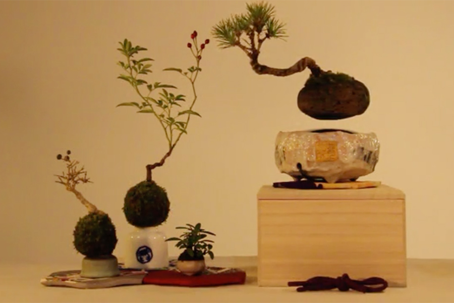 air_bonsai_04