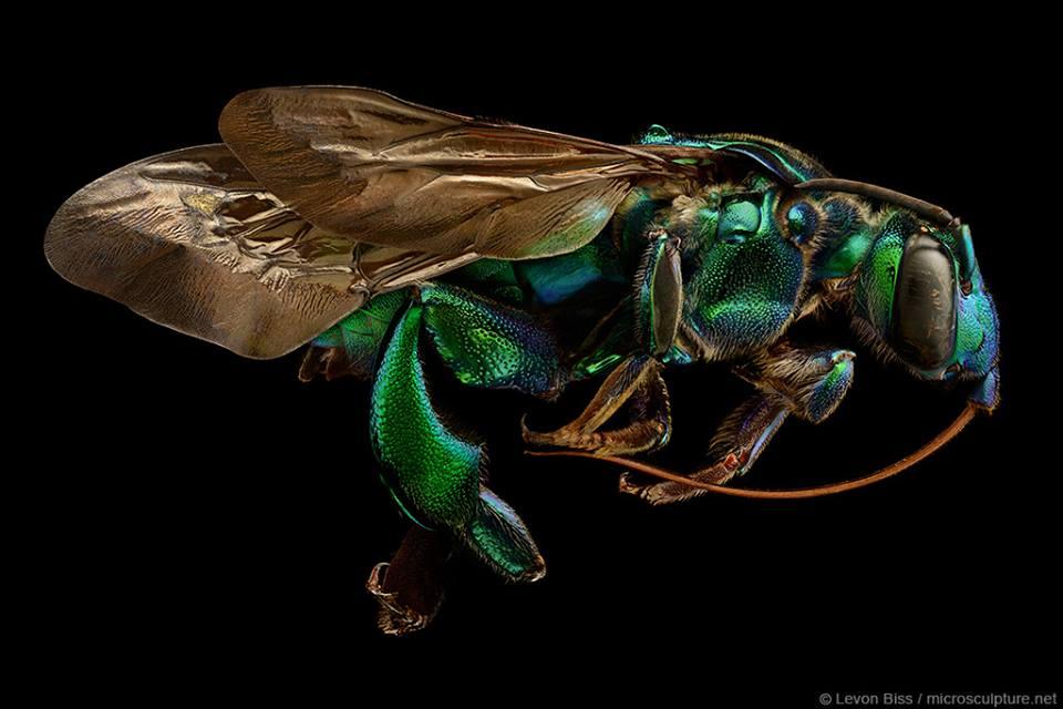 Insektenportraits von Levon Biss