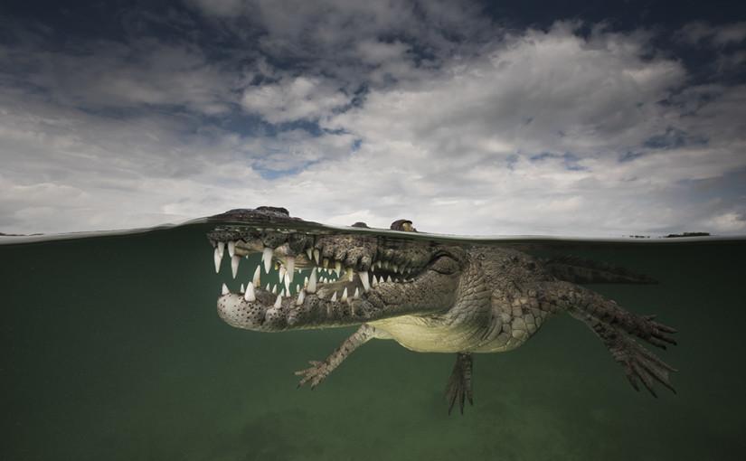 Unterwasser-Fotografie von Matty Smith