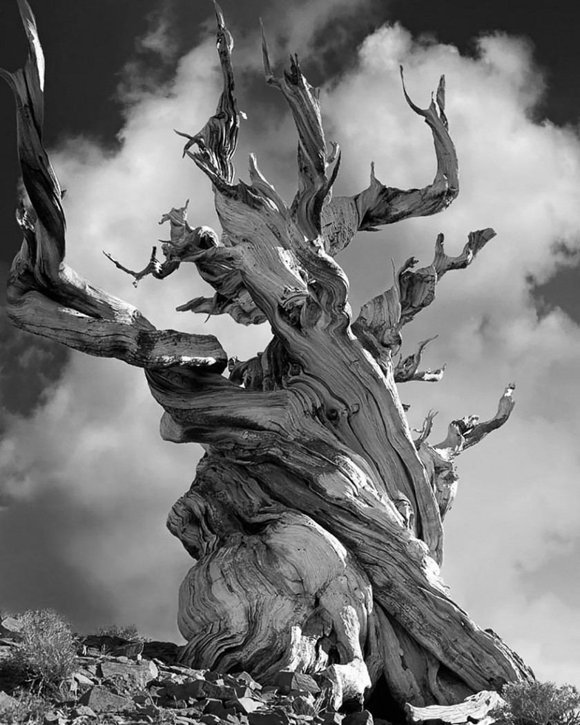 doorofperception.com-beth_moon-ancient_trees-12-840x1049