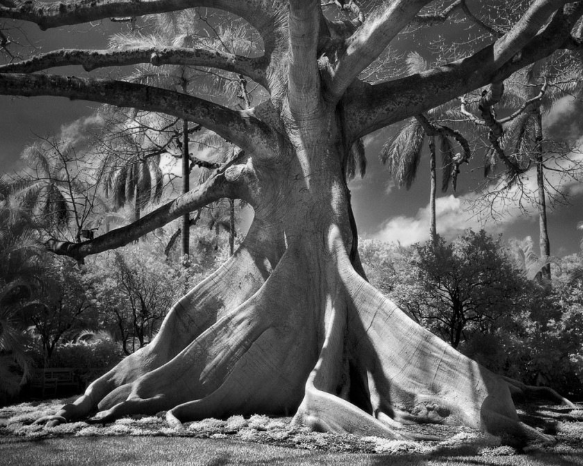 doorofperception.com-beth_moon-ancient_trees-16-840x671