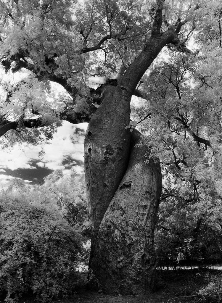 doorofperception.com-beth_moon-ancient_trees-9