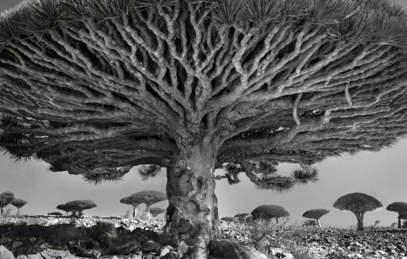 """Portraits of Time"" von Beth Moon"