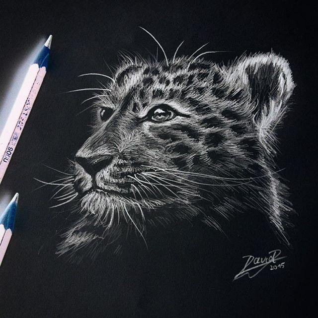 Der Jaguar auf einem schwarzen Hintergrund