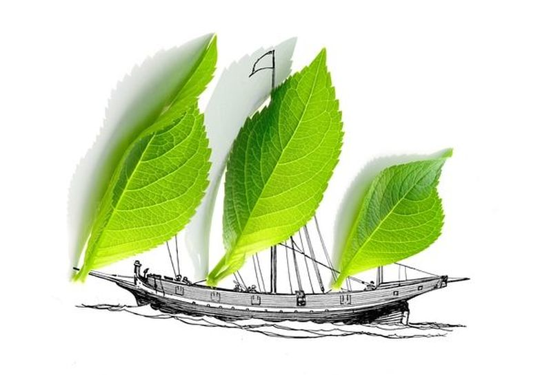 Ein Segelschiff mit grünen Blättern