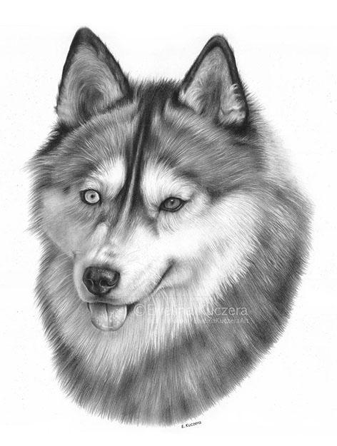 Der Siberian Husky