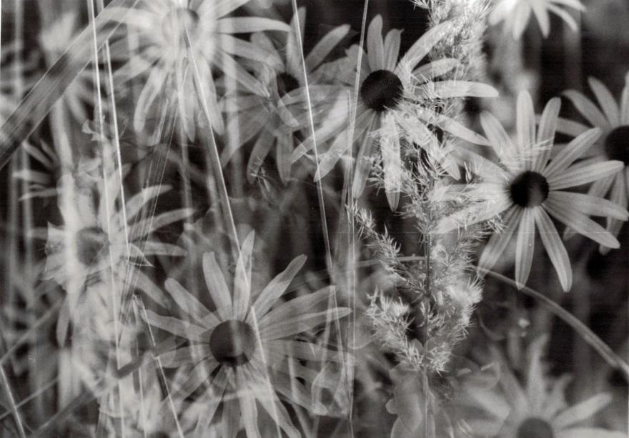 Mysteriöse analoge Fotografien von Jeannette. Blumen und Gräser