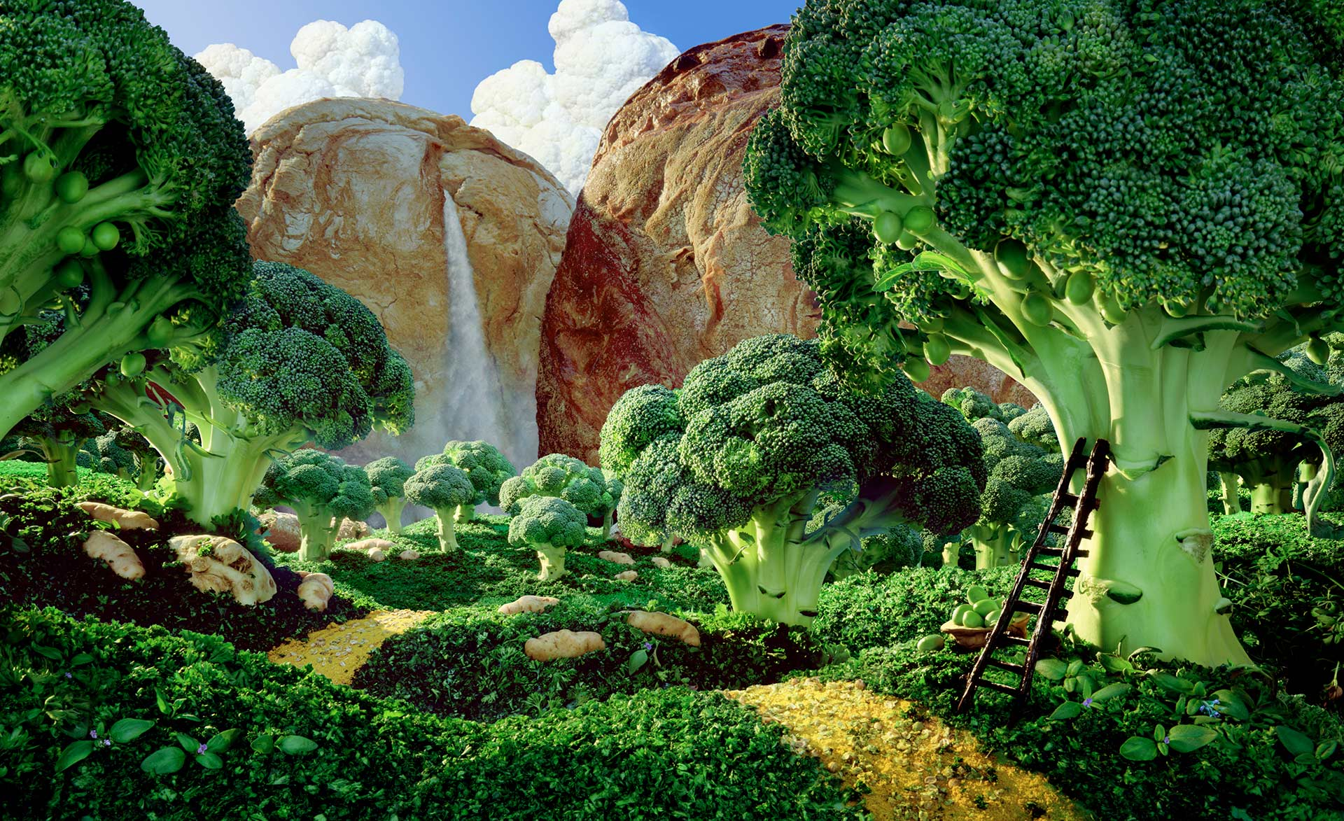 """Broccoli Forest"""