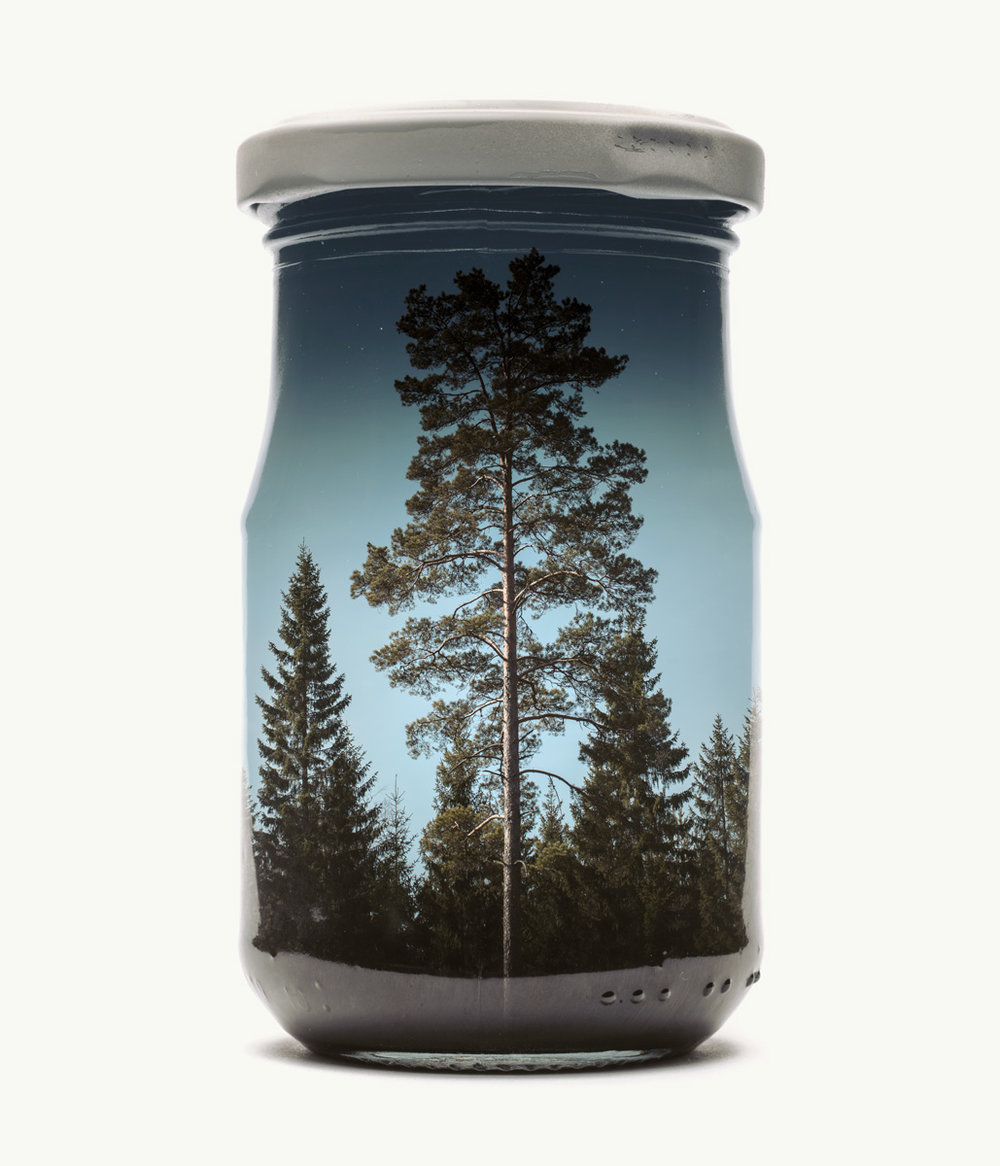 """Kreative Fotoprojekte """"Bilder im Glas"""" von Christoffer Relander. """"Pine Tree"""""""