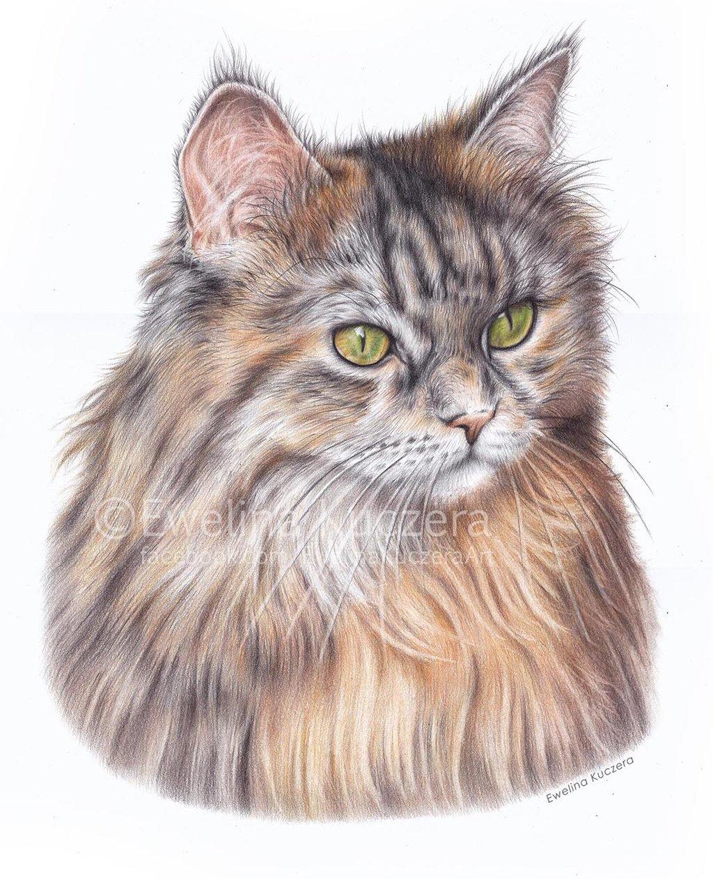 Wunderschöne Bilder von Ewelina Kuczera_Eine Katze