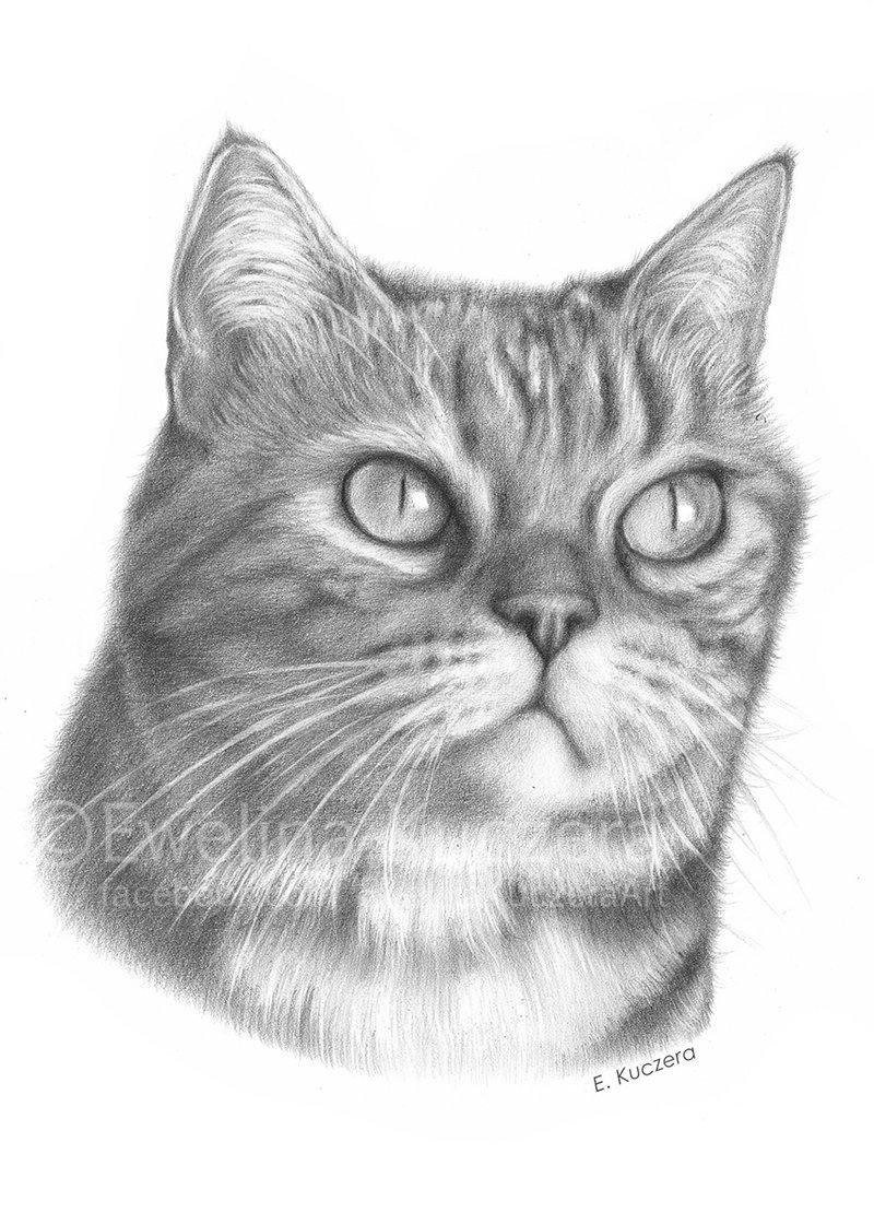 schwarz-weißes Portrait einer Katze