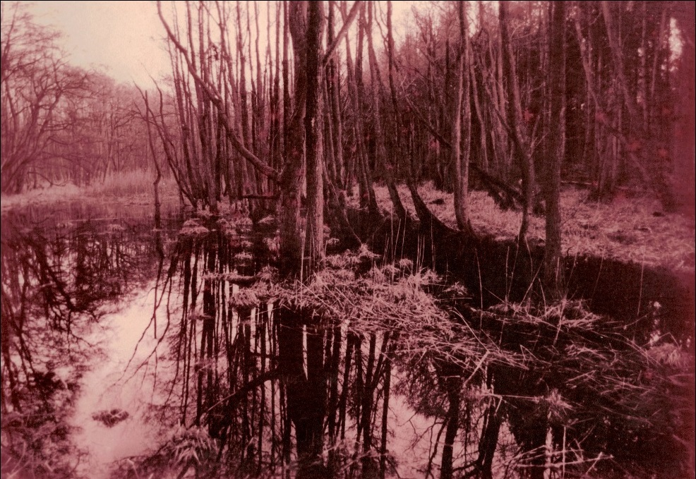 Roter Sumpf