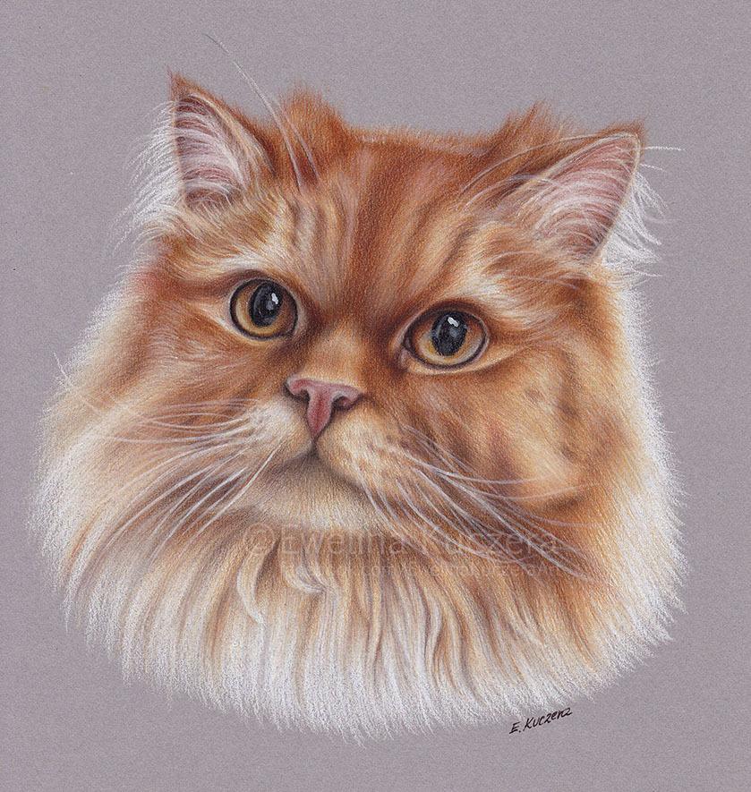Wunderschöne Bilder von Ewelina Kuczera. Eine rote Katze