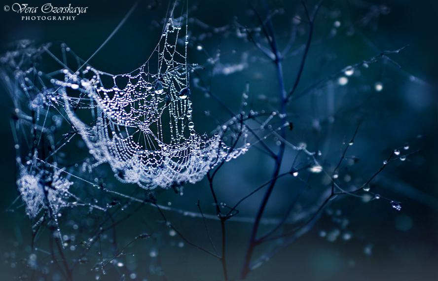 Zauberhafte Naturfotografien von Vera Ozerskaya_Spinnennetz