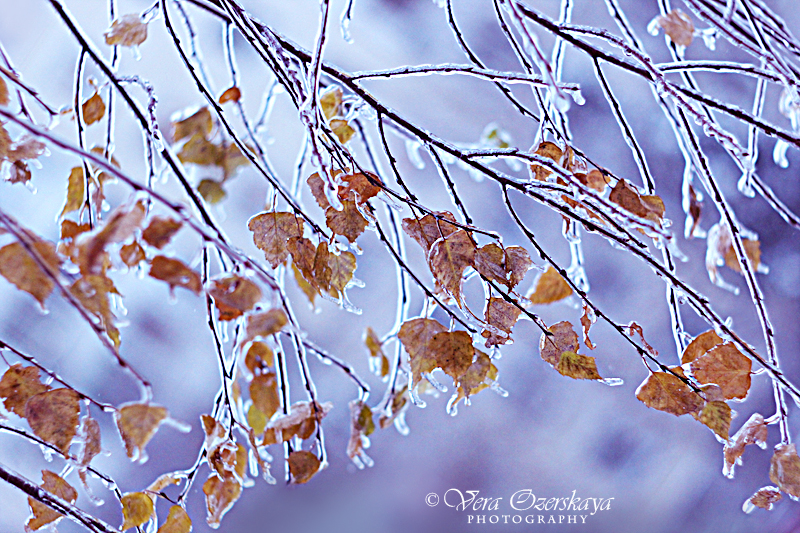 Zauberhafte Naturfotografien von Vera Ozerskaya_Birkenblätter