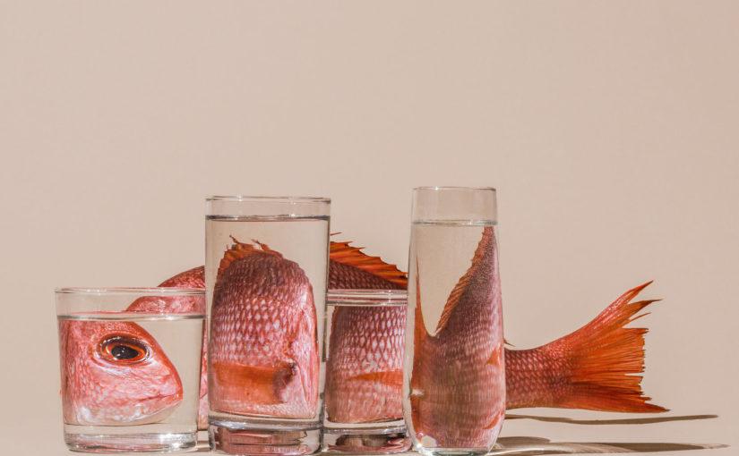 Erstklassige Fotokunst von Suzanne Saroff