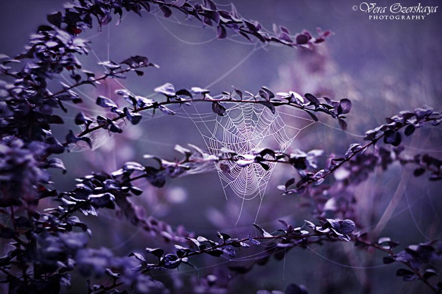 Zauberhafte Naturfotografien von Vera Ozerskaya
